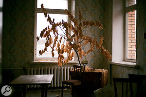 """Rasmus: """"This plant was left like everything else in 1998 and still has it leaves on. Because of the tough climate, things decay very slowly here. There are no bugs and low temperatures. We recorded the sound of these leaves."""""""