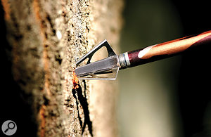 Getting to the point: it might seem obvious to use a 'woody' impact sound to accompany an arrow hitting a tree on screen, but try to think what might happen before the impact itself. How might you imply the sound of the arrow flying through the air or past the ear, for example? And does the camera perspective or editing suggest that the sound of an archer drawing their bow and releasing an arrow might usefully enhance things?